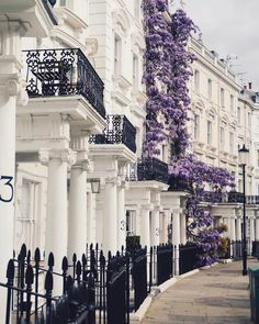 Beautiful flowering wisteria in the neighborhood of Notting Hill in London, England Notting Hill London, Architecture Design, French Architecture, London House, Top Travel Destinations, London Photography, Fashion Photography, Town And Country, Luxury Real Estate