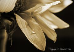 Image detail for -Sepia Photography | Eden's Captures