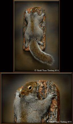 natural squirrel taxidermy - Google Search