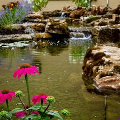 Want to add some life to your backyard? A water garden could be the perfect choice! Add the sound of water, and the color of all the plantings and fish to your space and really liven' it up! Visit www.atlanticwatergardens.com for more product information and inspiration.