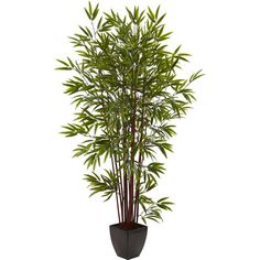 Nearly Natural Bamboo Silk Tree in Planter & Reviews | Wayfair Supply $144