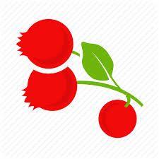 graphic Illustration Cranberries - Google-Suche