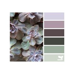 design seeds | search | for all who ♥ color via Polyvore featuring design seeds, color palettes and natural