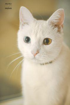White cat. by Monika_Malek on 500px