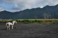 Bromo, East Java, Indonesia