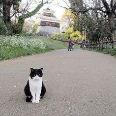 I am a Cat / 吾輩は猫である