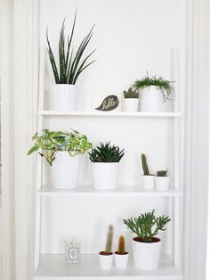 A sweet, modern boho kitchen makeover - visit The Sweetest Occasion for all the details on this gorgeous small kitchen remodel! Window Shelves, Plant Shelves, Window Shelf For Plants, White Shelves, Boho Kitchen, Kitchen Decor, Kitchen Ideas, Kitchen Shelves, Green Kitchen