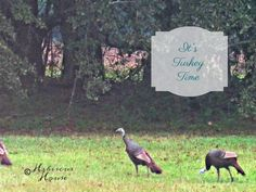 Hibiscus House: It's Turkey Time!