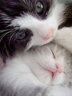 "So sweeet! Mommy with baby :) <a href=""http://musapg.catspray.hop.clickbank.net/""><img src=""http://www.catsprayingnomore.com/images/banners/standard/ad3.jpg"" border=""0"" alt=""Cat Spraying No More"" /></a>"