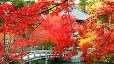 Eikando Temple - Kyōto |Expedia.co.jp