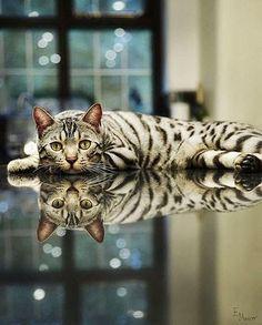 Bengal Cat ❣
