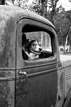 Somehow I felt that this photo belonged with Barns: Old pick up truck and a beagle mix dog that was called Queenie.