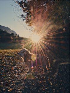 My dog Autumn 2017 Autumn 2017, Mountains, Dogs, Nature, Photos, Travel, Naturaleza, Pictures, Viajes
