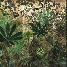 Field Studies No. 15, Lupinus albicaulis (Without Apology) by Andie Thrams