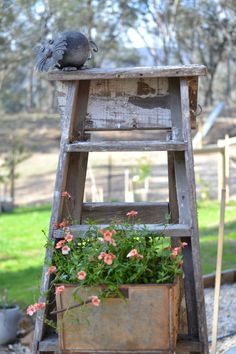 An old ladder some old grape dipping tins and a lovely plant..recycle re-use
