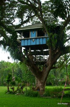 tree house. Philippines