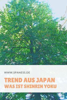 Shinrin Yoku: Der Wellnesstrend aus Japan. Wie Waldwellness unsere Gesundheit positiv beeinflusst bzw. beeinflussen kann. Was hinter Waldbaden steckt und wie es wirkt verraten wir. #JapanWellness #WaldWirkung #Waldtherapie