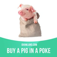 """""""Buy a pig in a poke"""" means """"to buy something without seeing it or knowing anything about it"""". Example: I just took the salesman's word that this camera worked. I guess I bought a pig in a poke."""