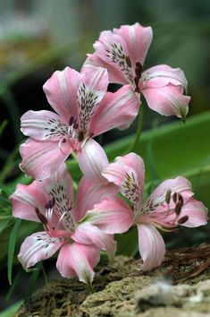 Pink lily coupon code