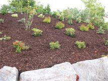 Tips til å plante i skråning