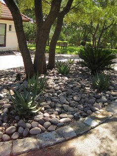 Simple xeriscaping idea for under shady trees