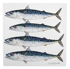 Mackerel fish) Greeting Card by Richard Bramble Mackerel Fish, Spanish Mackerel, Bramble, Hook Tattoos, Ocean Drawing, Fish Sketch, Lobster Fishing, Sea Whale, 3 Fish