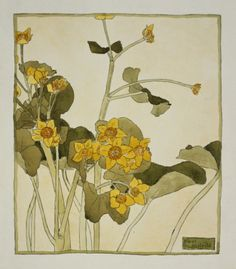 heaveninawildflower:  Marsh Marigold (circa 1915). Watercolour and ink by Hannah Borger Overbeck (1870-1931).Image and text courtesy LACMA