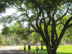 A forest of botanical treasures goes unnoticed in Elysian Park — The Eastsider LA
