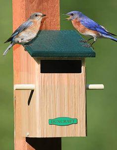 instructions on how to make a hummingbird house | hummingbird