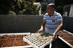 Alimentos orgánicos brotan en los tejados de una favela de Río de Janeiro