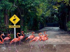 Flamingos at Bahamas Animals And Pets, Funny Animals, Cute Animals, Wild Animals, Flamingo Art, Pink Flamingos, Flamingo Beach, Affinity Photo, Pink Bird