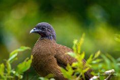 Happy Monday Fans! Who knows the name of this bird found in Tobago?   Image Credit: David Steffan Huggins   #Tobago #Trinidad #TrinidadAndTobago #Caribbean #Monday #HappyMonday #TobagoBookings