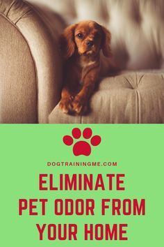 Find Out How To Get Rid Of Dog Odor In Your Home Learn How To