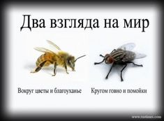 Kaksi näkökulmaa - Two ways to view the world: There are flowers everywhere and it's so beatiful OR what the fly thinks? Poem Quotes, Best Quotes, Cool Words, Wise Words, Humor, In My Feelings, Cat Memes, Food For Thought, No Time For Me