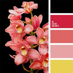 Bright palette in which the cheerful yellow and pink paint are in contrast to… Scheme Color, Colour Pallette, Colour Schemes, Color Combos, Black Color Palette, Colour Chart, Color Harmony, Color Balance, Cranberry Color