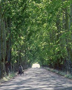 Trees (Carmelo - Uruguay)
