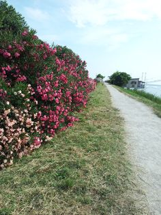 Rimini in fiore