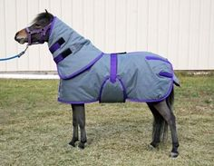 Mini Horse Winter Blanket And Neck Hood