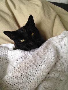 My cat Gorgon.http://ift.tt/2oMFGVn