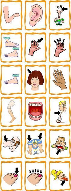 Body parts flash cards pictorial representations #langchat awesome flashcard site