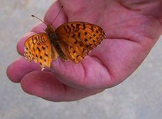Beauty's broken wing by Isealdor, via Flickr