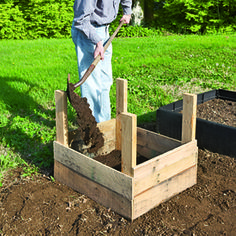 planting potatoes in a wood box