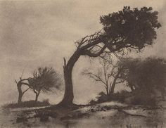 mythologyofblue:  Harold Cazneaux, The bent tree, Narrabeen, 1914
