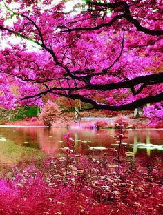Beautiful Places To Visit, Beautiful World, Spring Scenery, Beauty Planet, Seen, Colorful Trees, Nature Scenes, Pretty Pictures, Great Artists