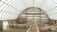 light interior minimizes lighting requirements. the brightness inside the building is better for the animals ans reduces their health problems