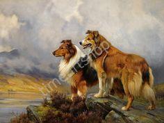 Колли, картина раскраска по номерам, размер 40*50см, цена 750 руб.