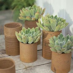 How about turning recycled cans into flower pots. Instead of the usual wrapped in this or covered in that, these recycled cans are given a coat of  Rust-Oleum textured spray to make them look organic, which works well when planted up with a selection of succulents or cactii.