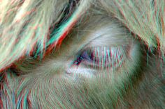 https://flic.kr/p/Vget9a   Fly Highlander 3D   anaglyph stereo red/cyan