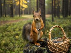 a squirrel and a nut basket