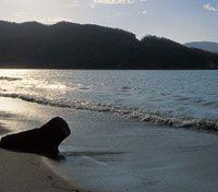 Playa en la ensenada de Nenguange en el extremo noroccidental de la Sierra Nevada de Santa Marta.